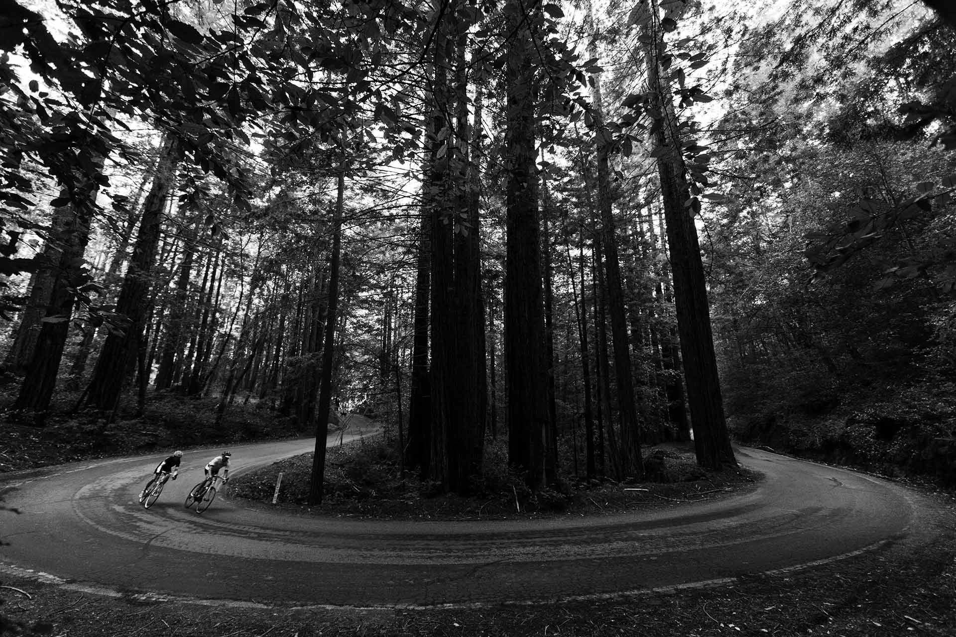 Bikers in a forest